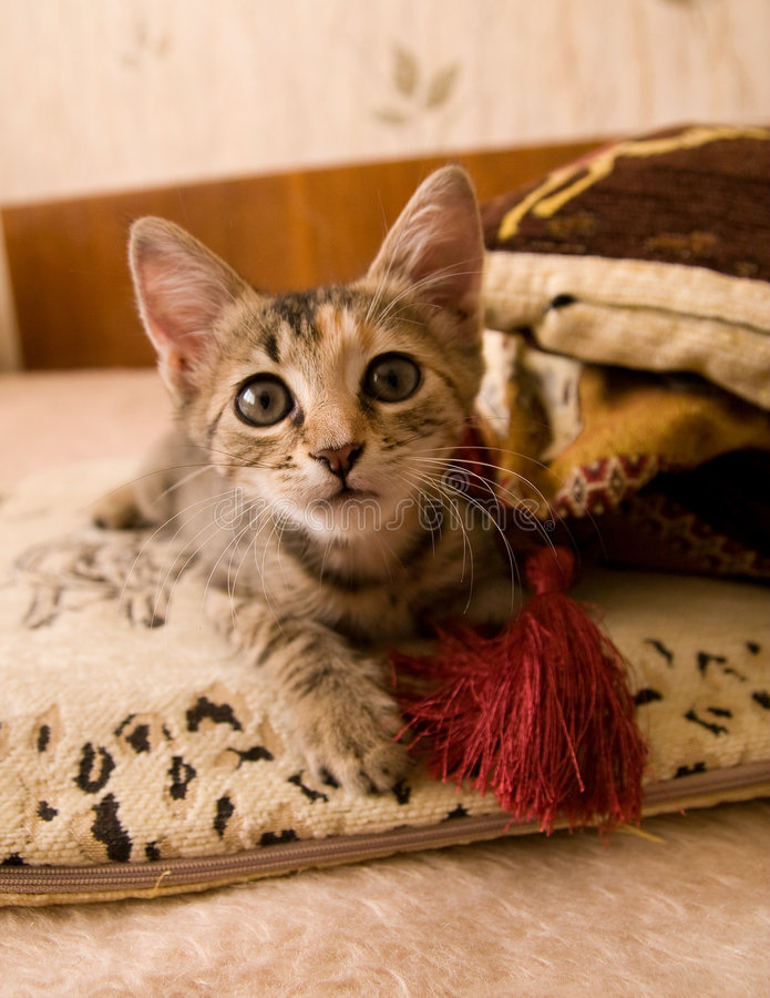 Little cat. Sitting on the sofa near a pillow stock photo