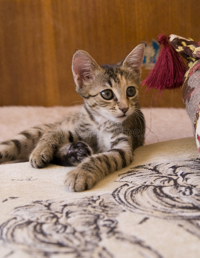 Free Little Cat Royalty Free Stock Image - 6047116