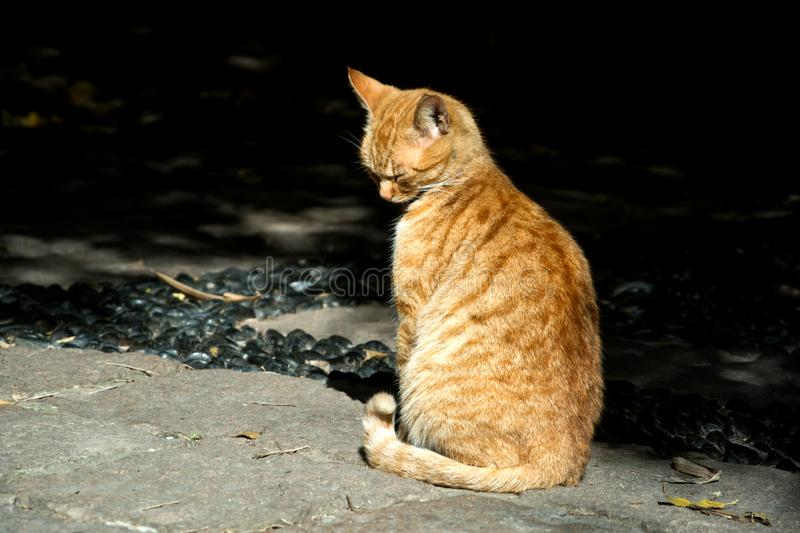 A little orange cat. This little cat basked himself and its head turned around just like it was thinking serious stock photography
