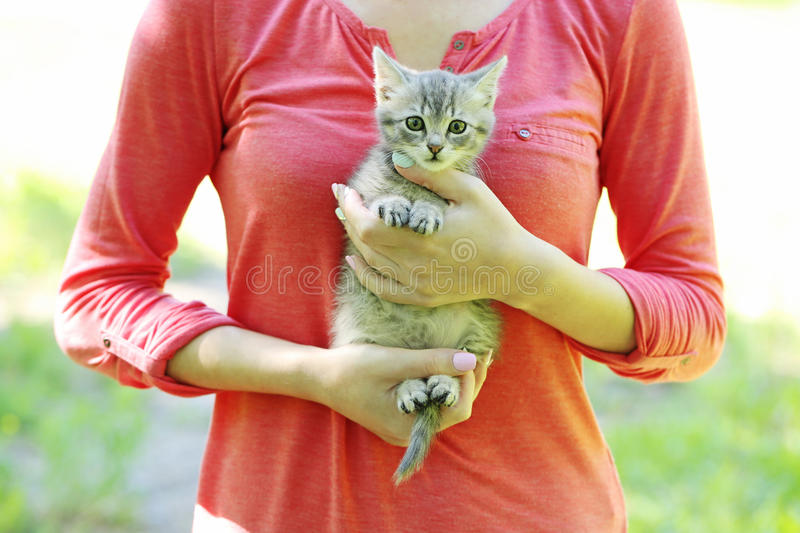 Little cat. Beautiful little cat on female hands, outdoors stock photography