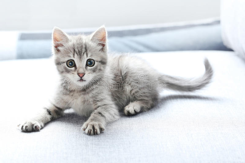 Little cat. Beautiful little cat on a grey sofa stock photography
