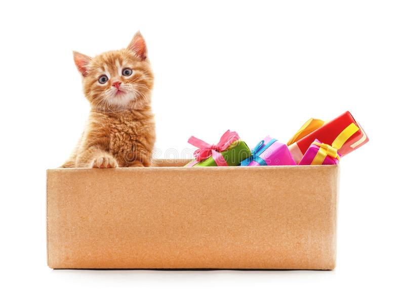 Little cat in the box with gifts. On a white background stock photos