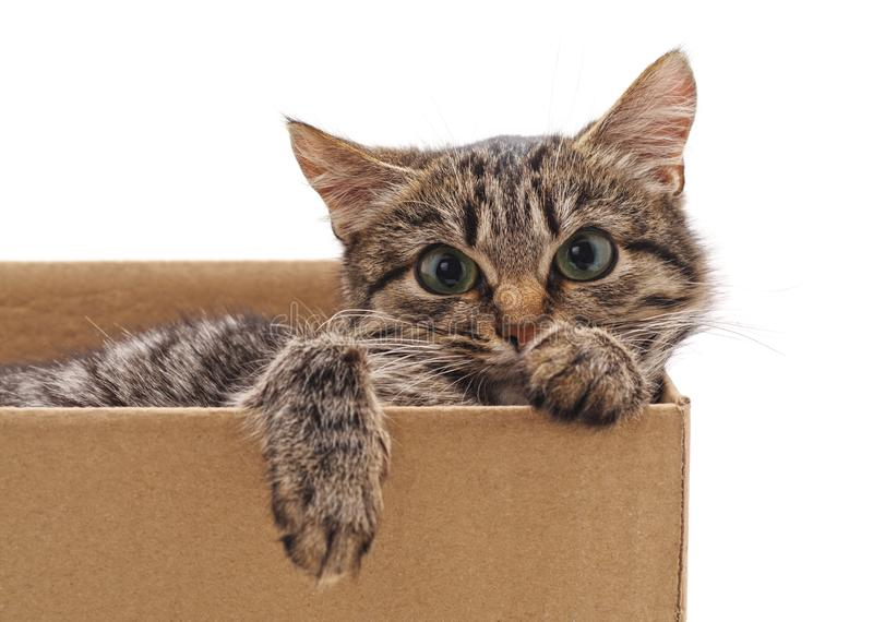 Little cat in the box. On a white background royalty free stock photography