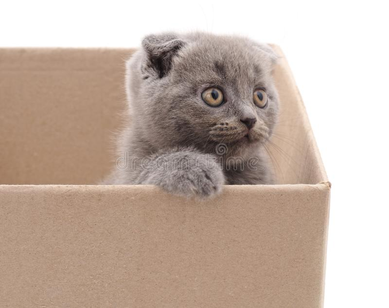 Little cat in the box. On a white background royalty free stock images