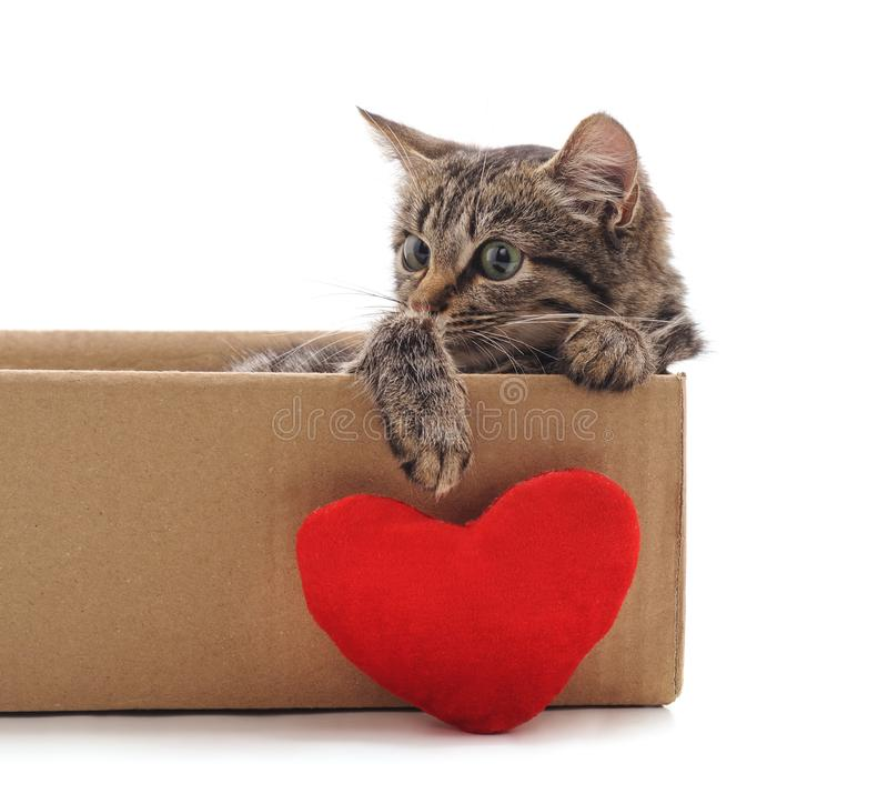 Little cat in the box with a toy heart. On a white background stock photography