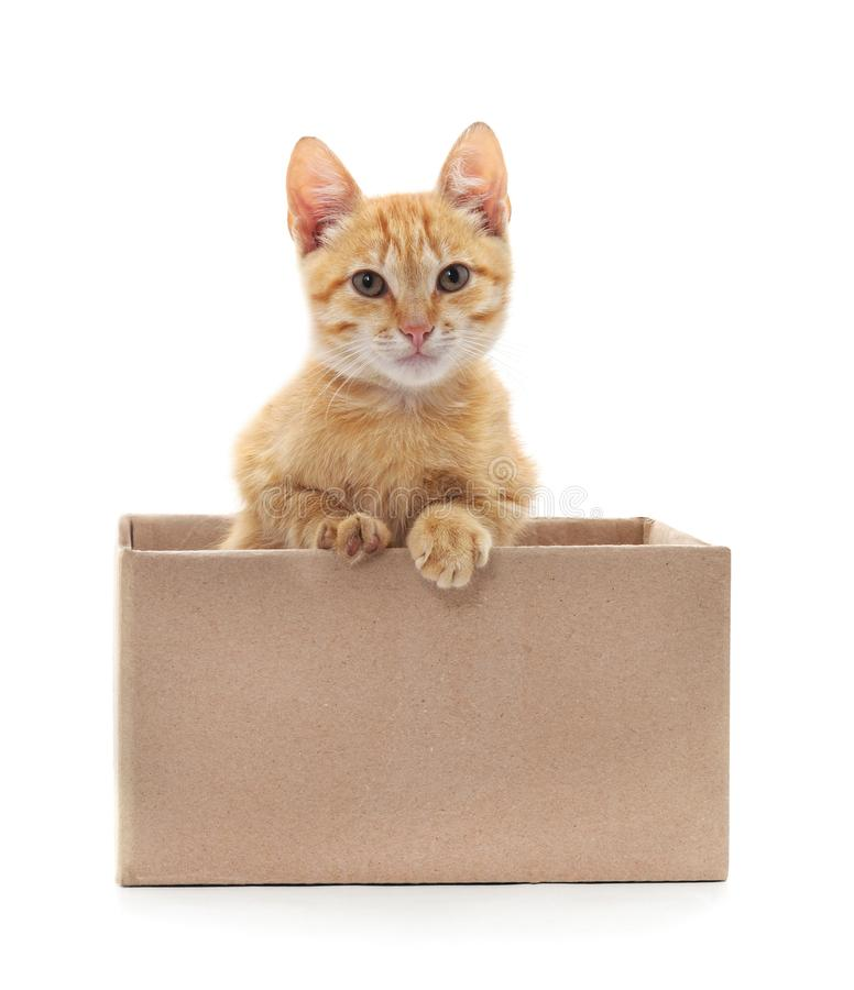 Little cat in the box. Little cat in the box on a white background stock photography