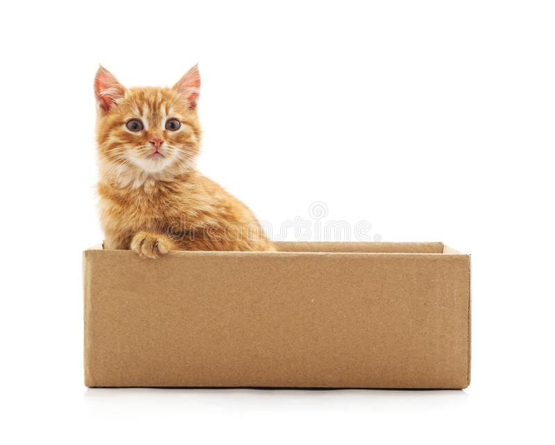 Little cat in the box. On a white background royalty free stock photos