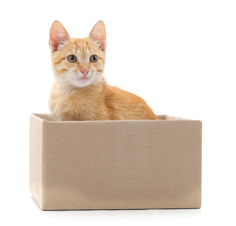 Little cat in the box. Little cat in the box on a white background royalty free stock image