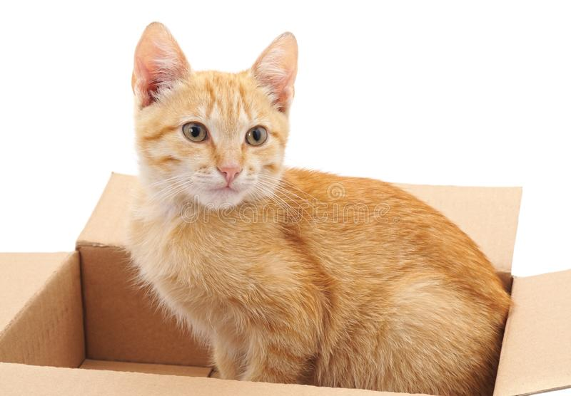 Little cat in the box. On a white background stock image