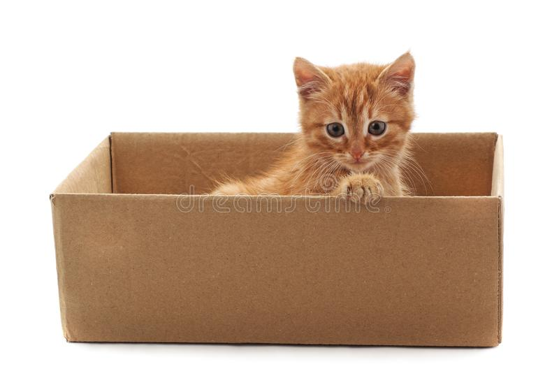 Little cat in the box. On a white background stock images