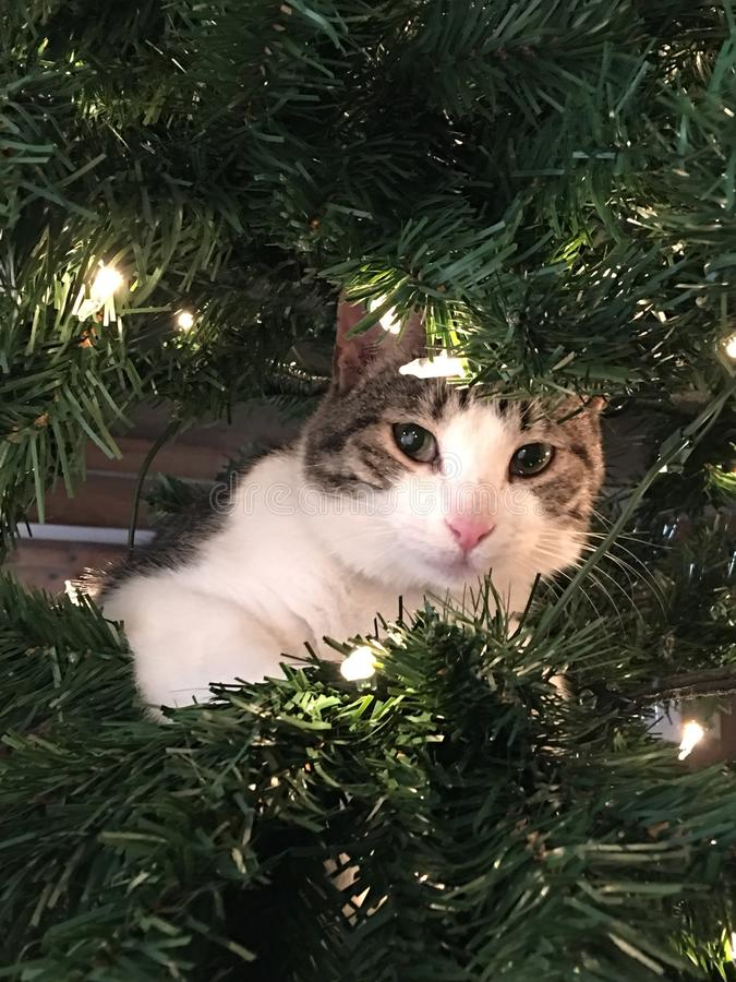 Little cat Christmas. Little cat climbed up the tree stock photography