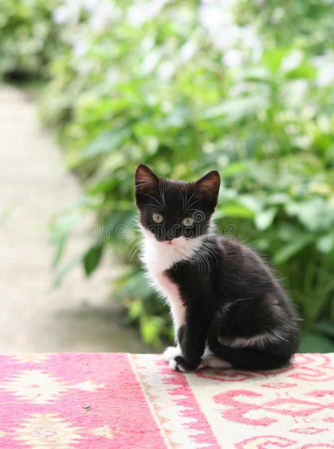 Little cat. A cute little cat with black and white color stock photo