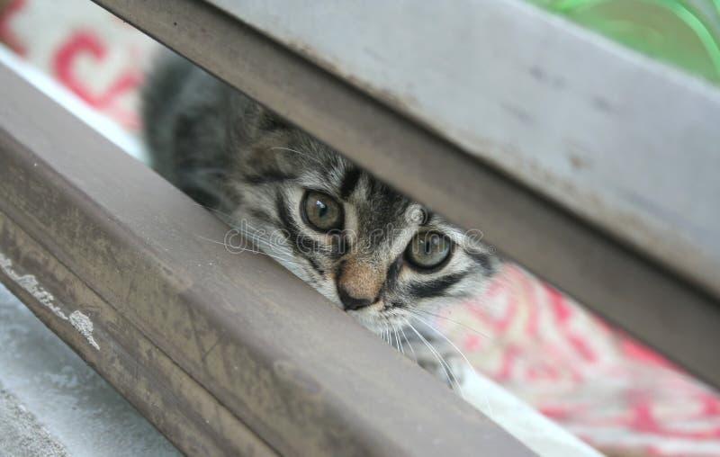 Little cat. A little cute grey cat stock image