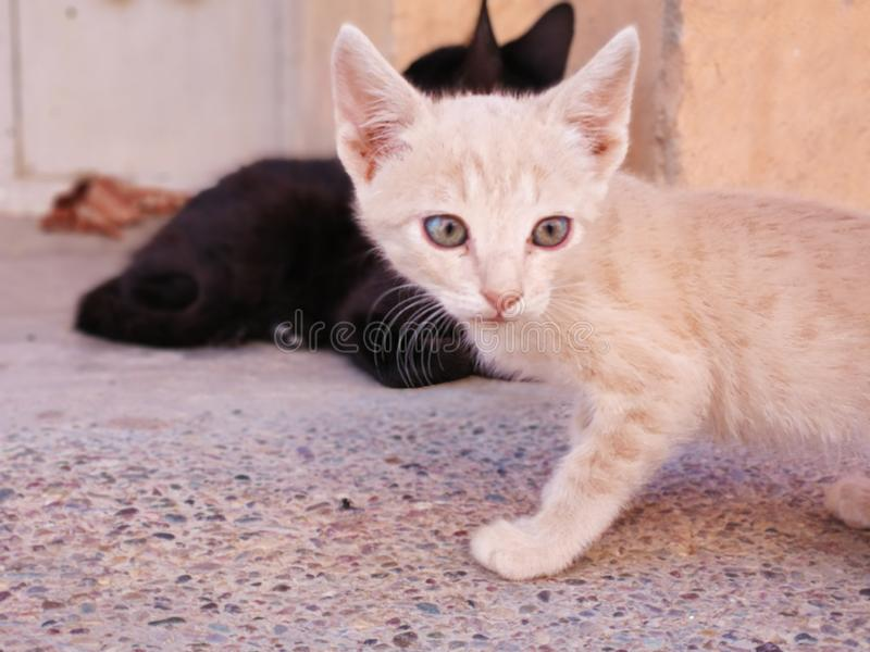 A little cat. Eyes, sweet, beautiful stock photography