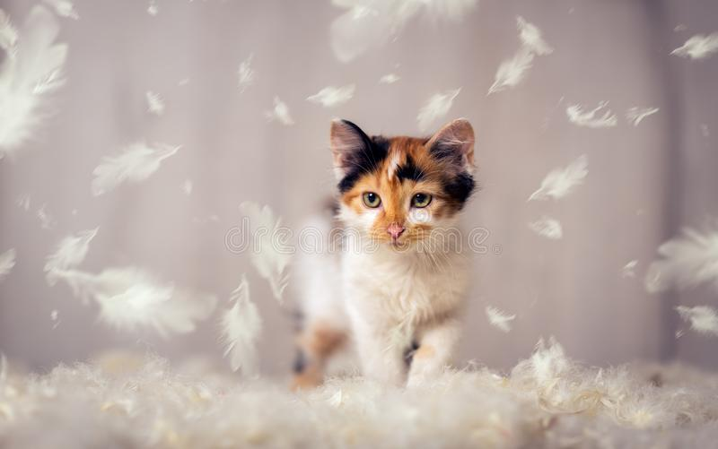 Little cat and feathers. Little cat playing with feathers royalty free stock photography