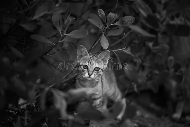 A Little Cat. In the Garden royalty free stock photography