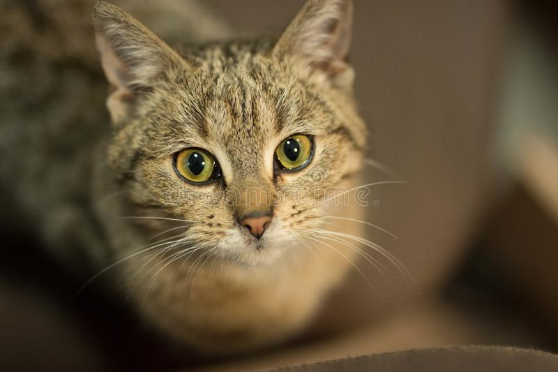 Little cat. Little gray cat with green eyes royalty free stock images