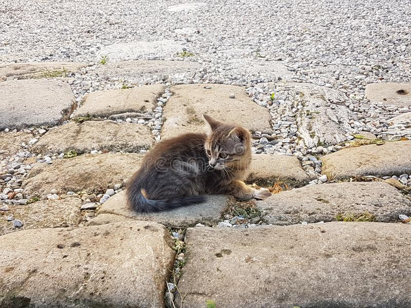 Little cat on the ground. Little cat lying on the ground royalty free stock image