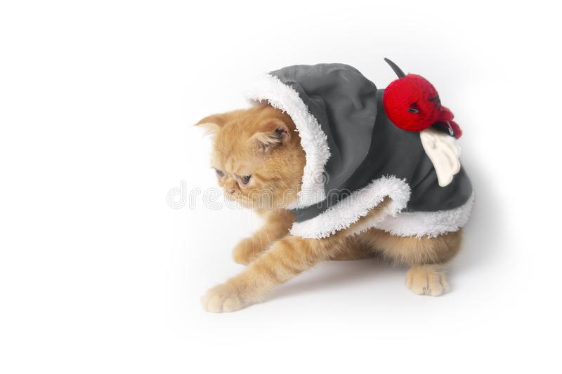 Little cat in halloween devil suit catching something . stock photos