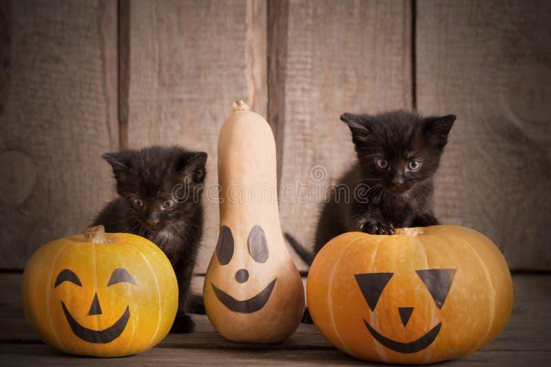 Little cat with halloween pumpkins. Black little cat with halloween pumpkins royalty free stock photo