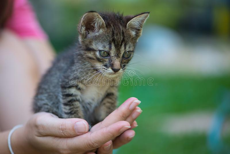 Little cat on hand. Show pet background concept royalty free stock images