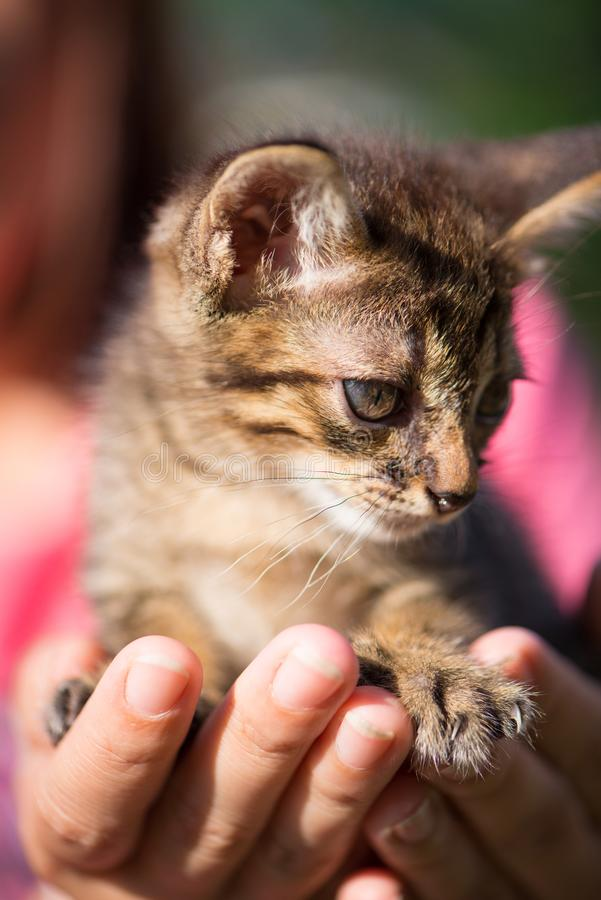 Little cat on hand. Show pet background concept royalty free stock photo