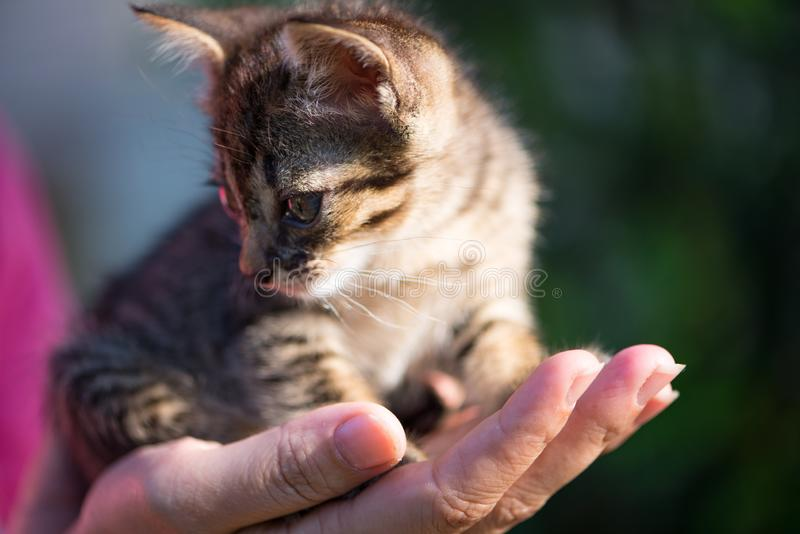 Little cat on hand. Show pet background concept stock images