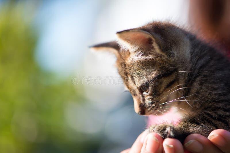 Little cat on hand. Show pet background concept stock photos