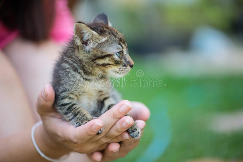 Little cat on hand. Show pet background concept stock photography