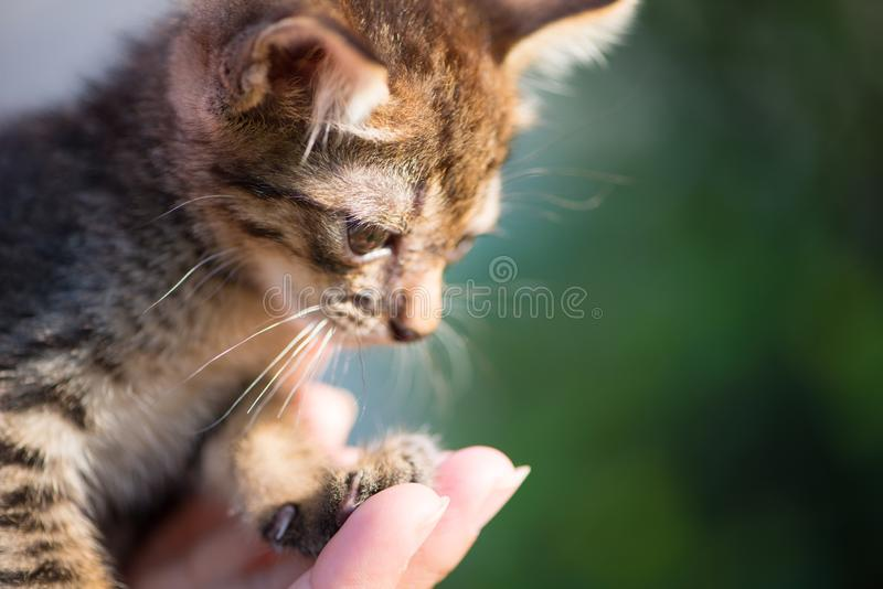 Little cat on hand. Show pet background concept stock photo