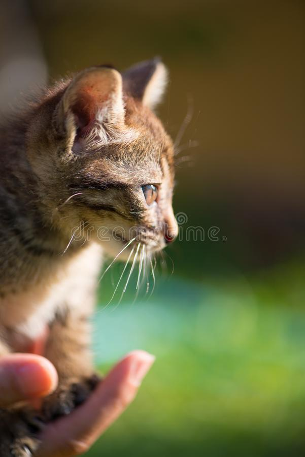 Little cat on hand. Show pet background concept royalty free stock photos