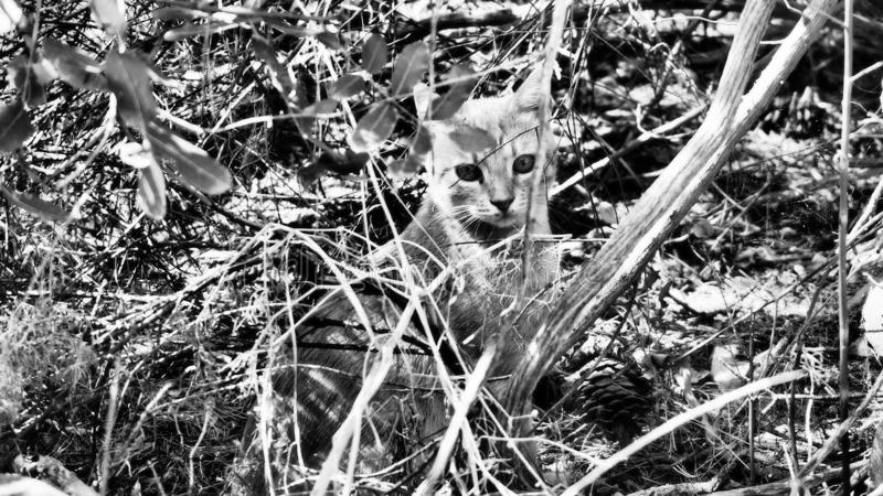 Little cat hiding in the scrub. In a forest in Croatia stock photos
