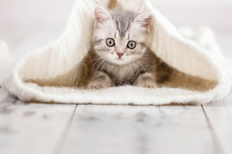 Little cat at home stock images