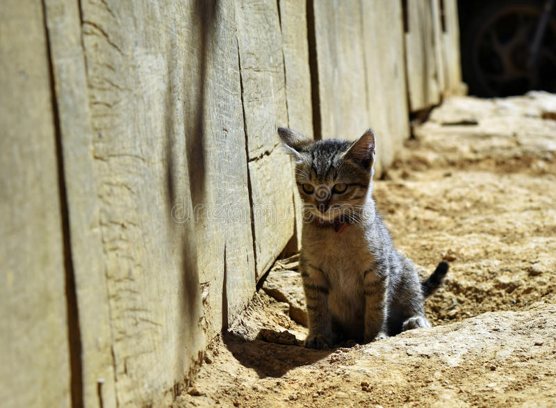 Little cat stock photography