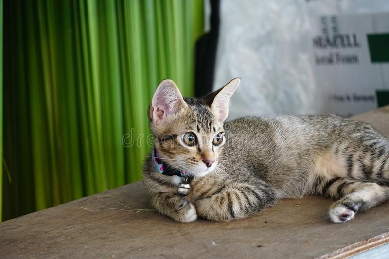 Little cat lay and look forward. To the other side stock photos