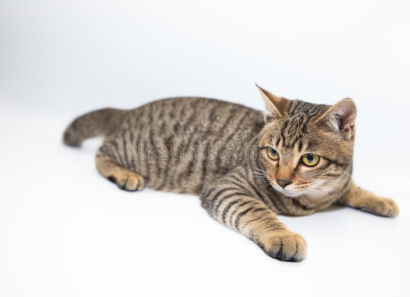 Little cat. With white color background stock images