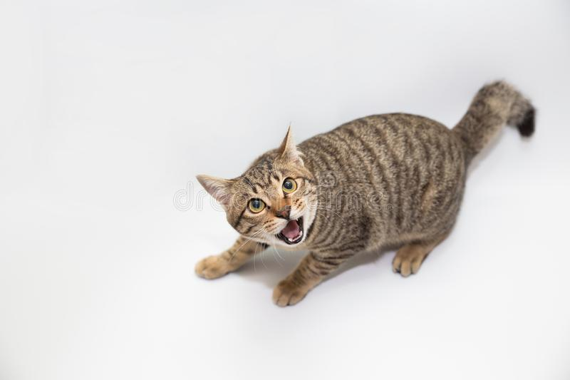 Little cat. With white color background stock photo