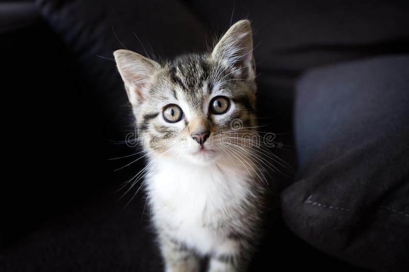 Little cat looking at the camera. Portrait of a little cat looking at the camera royalty free stock image