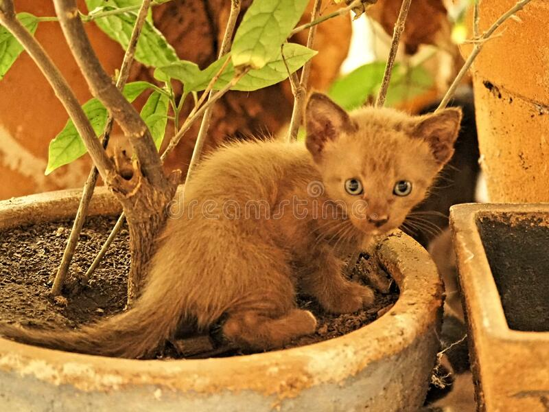 Little cat mammals stock image