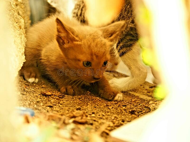 Little cat mammals royalty free stock photography