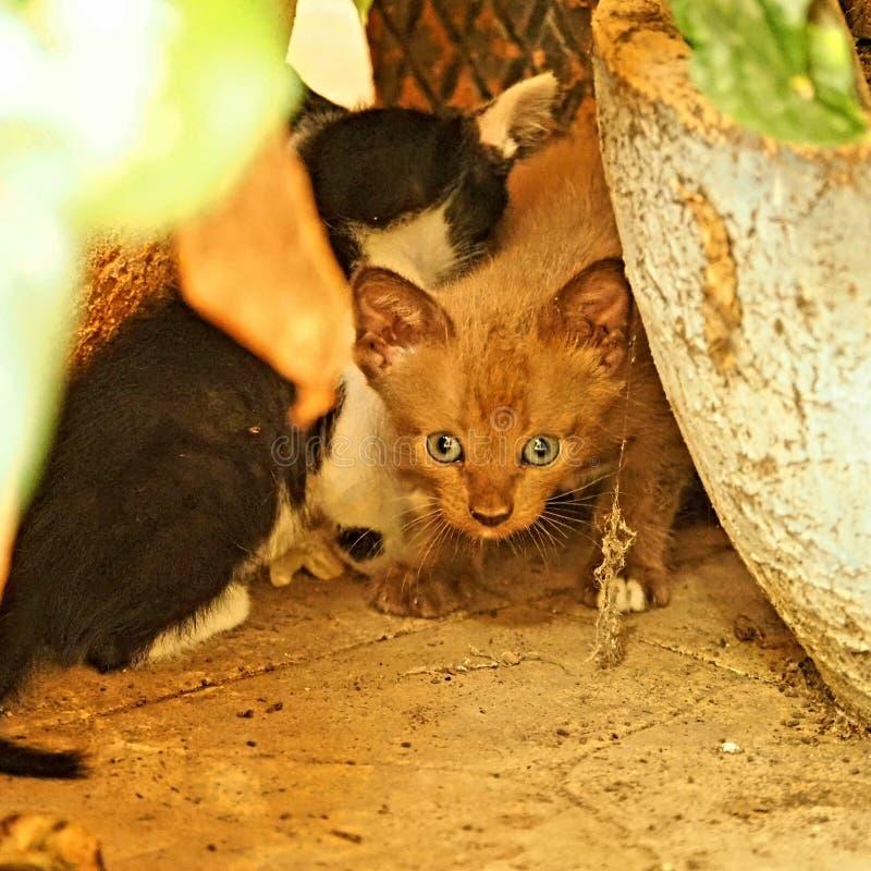 Little cat mammals royalty free stock photo