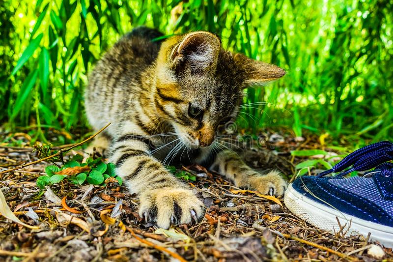 Little cat outdoors. Little cute cat outdoors near green tree royalty free stock photos