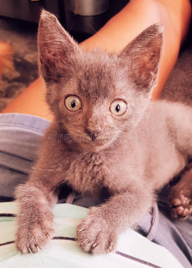 Little cat. Pet royalty free stock image