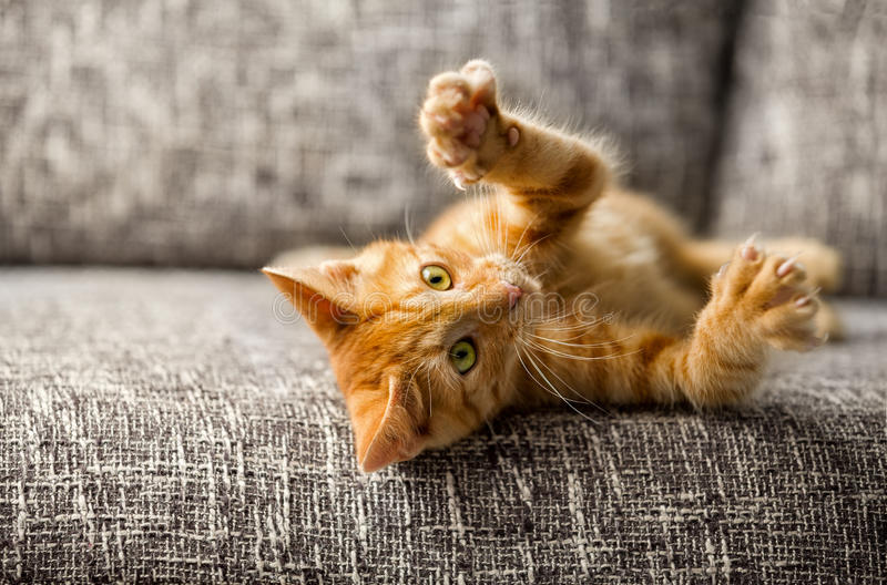 Little cat playing. On the bed stock image