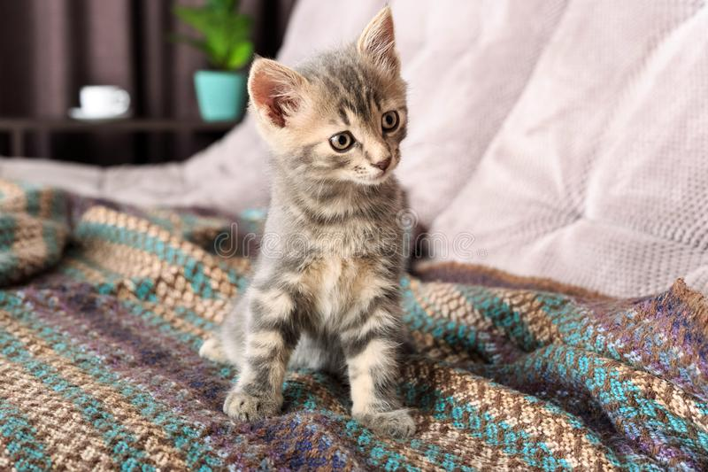 Little cat playing on the bed. Little cute fluffy cat. Little cat playing on the bed. Little cute fluffy cat royalty free stock photo