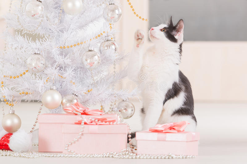 Little cat playing with Christmas tree ornaments. Cute little Little cat sitting with Christmas gifts and playing with Christmas tree ornaments royalty free stock image