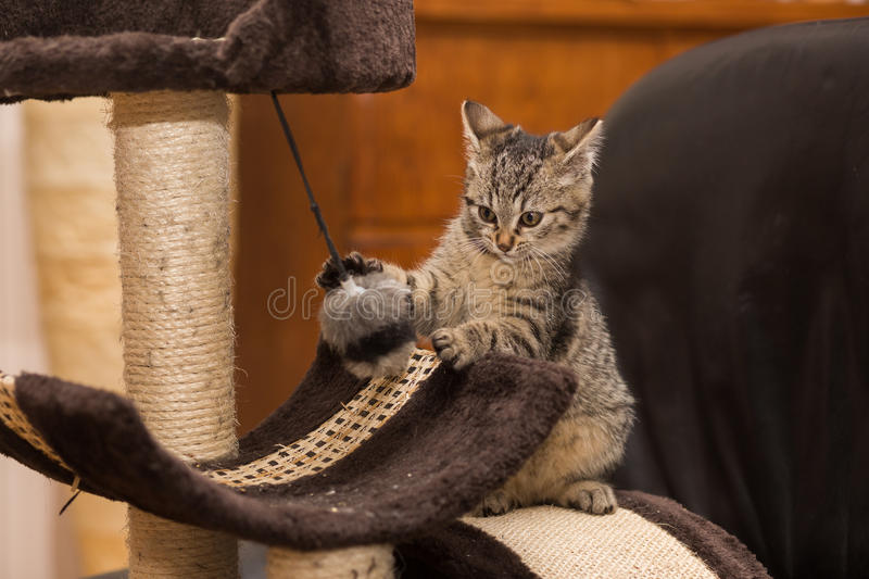 Little Cat. A little cat playing on the Cat Scratch Tree stock photos
