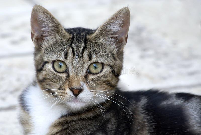 Little cat. Portrait of a little cat stock photo