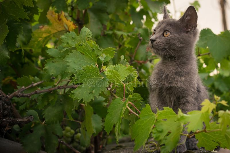 The little cat. Sits on a fence in a grape royalty free stock images