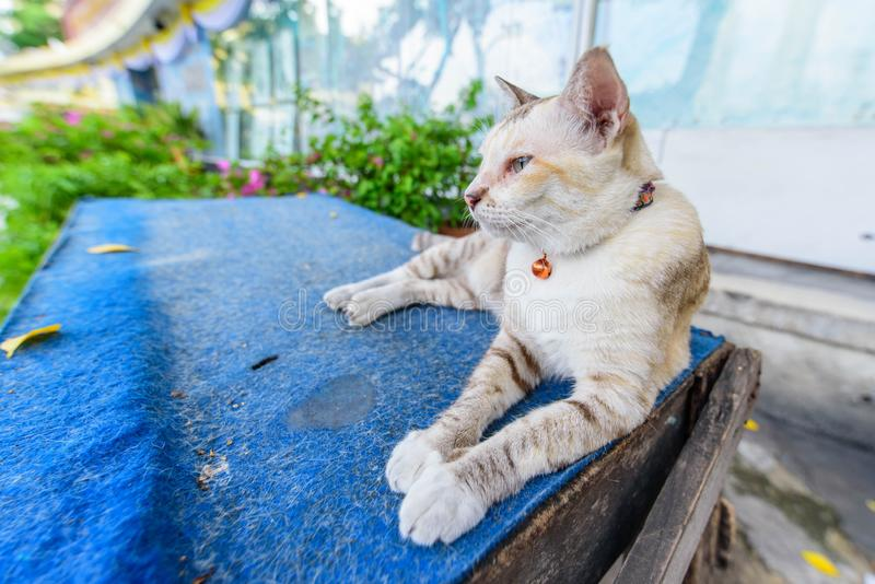 Little cat sitting on table. Little lovely cat sitting on table royalty free stock images